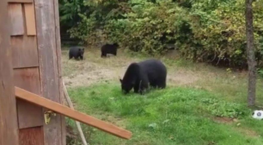 Bahçeye giren ayı kibarlıktan anladı
