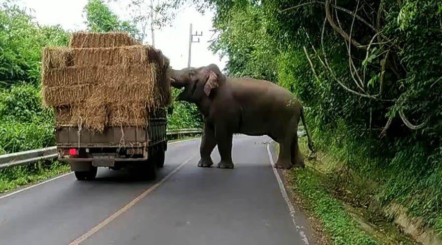 Yol kenarında bulunan fil haraç kesti