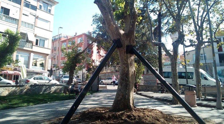 Çengelköy'deki tarihi çınar iyileşiyor