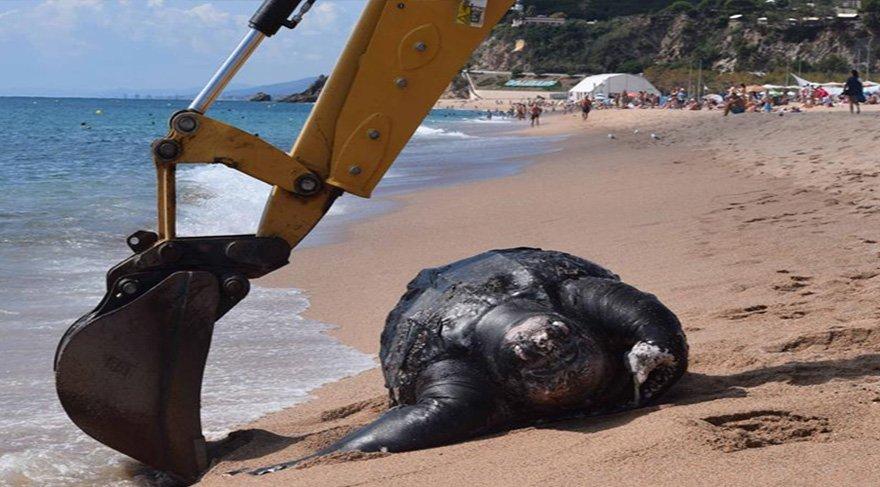 700 kiloluk dev deniz kaplumbağası karaya vurdu!