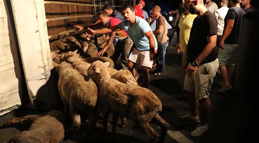 Hayvan yüklü kamyonda can pazarı!