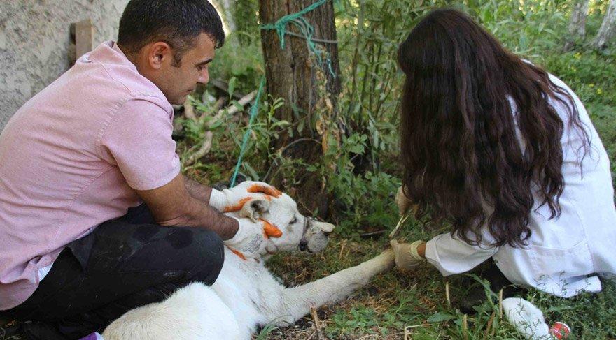 Varto'da yaralı köpeğe Kaymakam sahip çıktı
