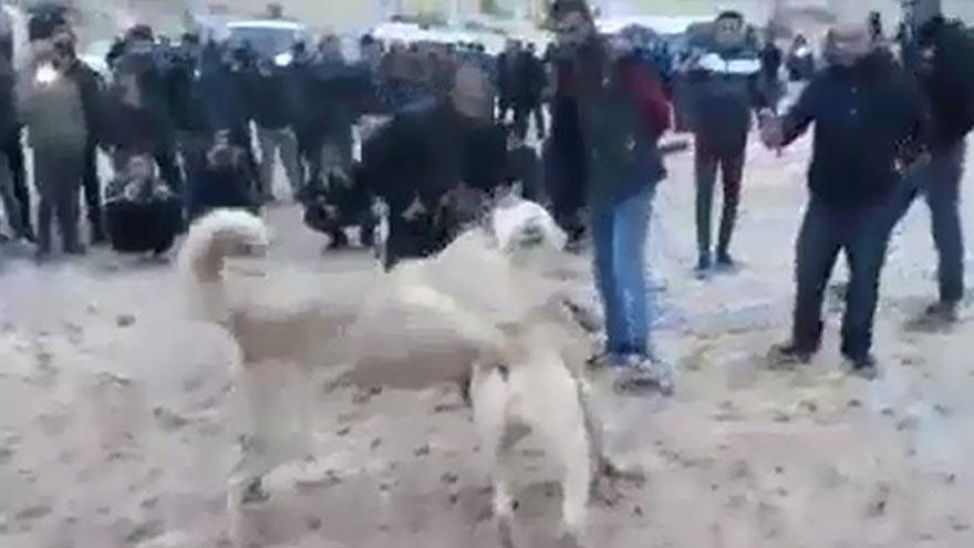 Köpek dövüştürenlere ceza!