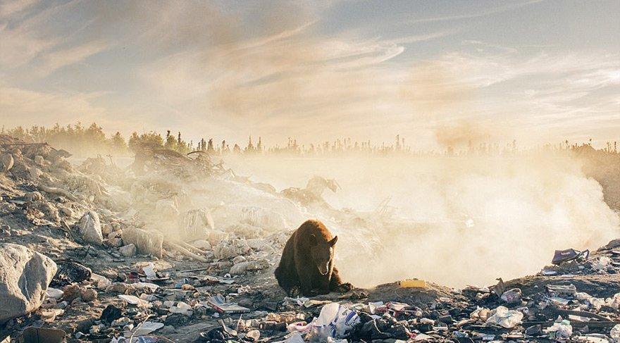 Bu fotoğraf insanın doğaya zulmünü gözler önüne seriyor