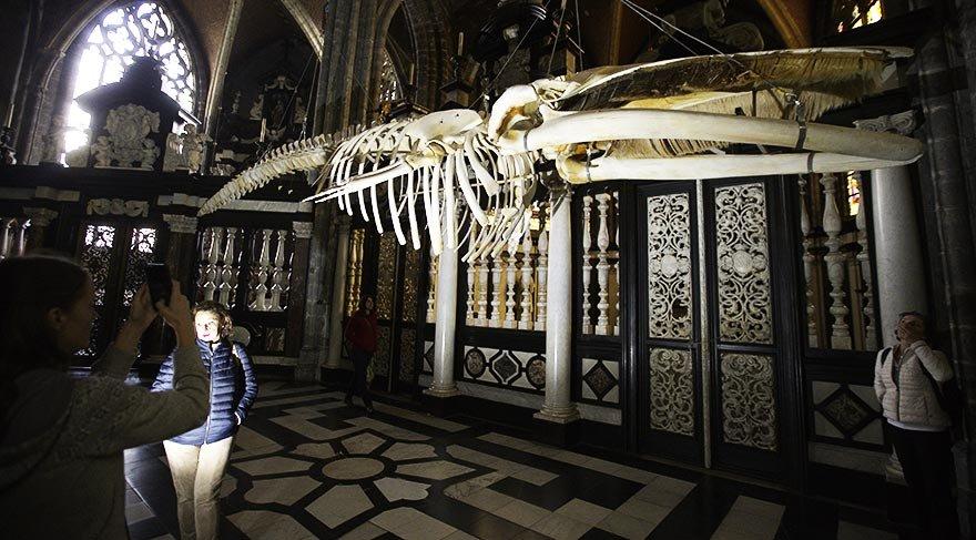 Balinanın iskeleti katedralde sergileniyor