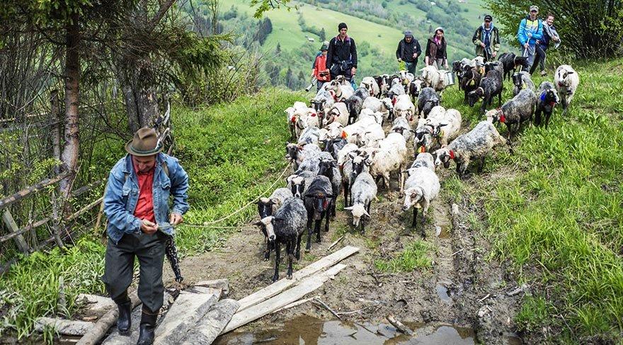 Karpatlar'da çobanların festivali