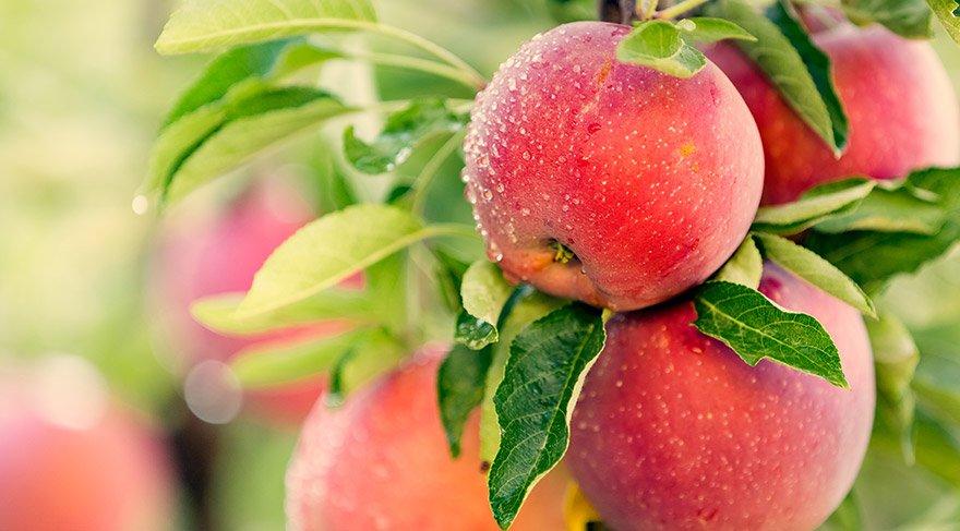 Elma kabuğundaki zararlı kimyasalları temizlemenin bir formülü bulundu