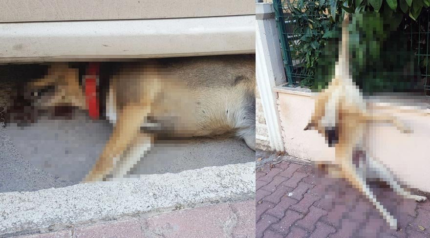 Hayvanları Koruma Günü'nde katliam