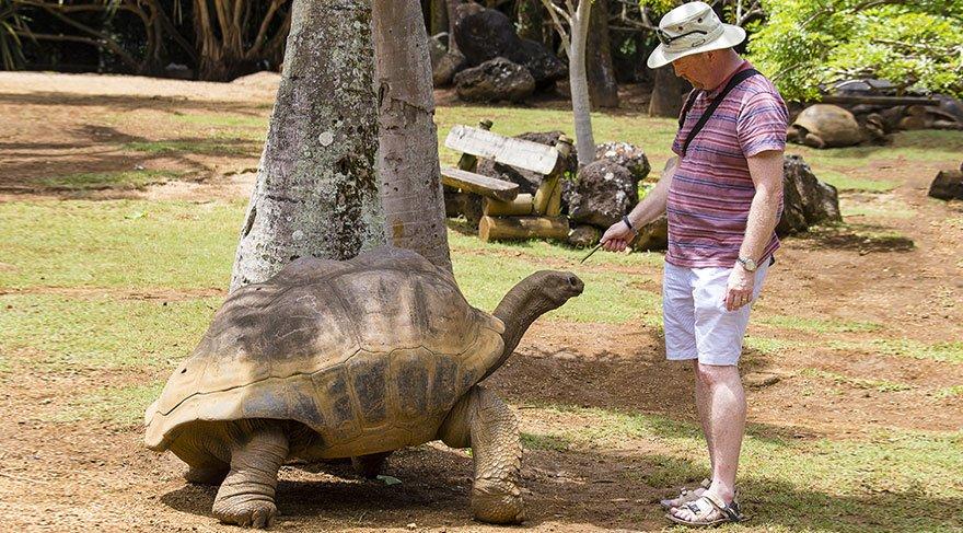 'Uzun yaşamak istiyorsanız kaplumbağa gibi olun'