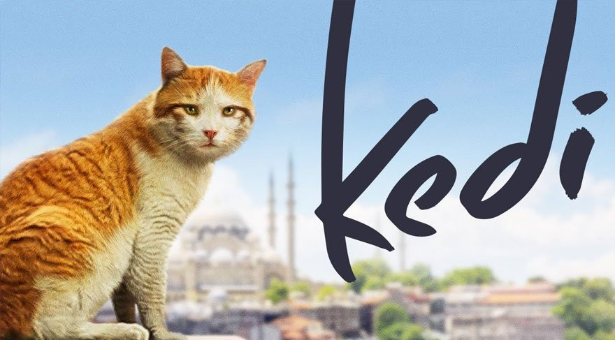 İstanbul'un 'Kedi'leri Rusya'da gösterimde