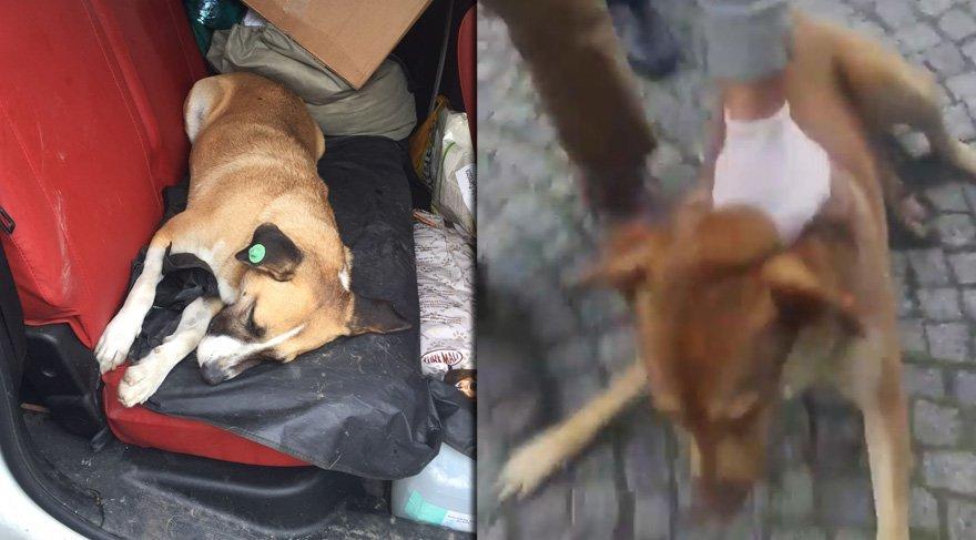 Eyüp Sultan Belediyesi'nde hayvan katliamı skandalı bitmiyor