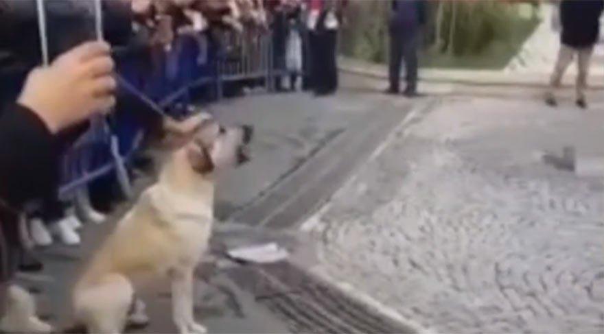 Sevimli sokak köpeği Eyüp Belediyesi'ni böyle protesto etti