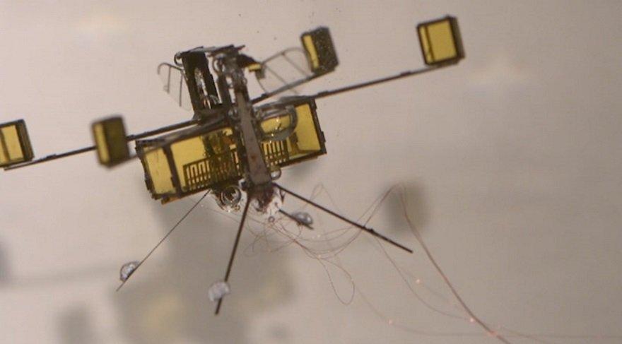 Bu kanatlı böcek robot hem uçabiliyor, hem de yüzebiliyor!