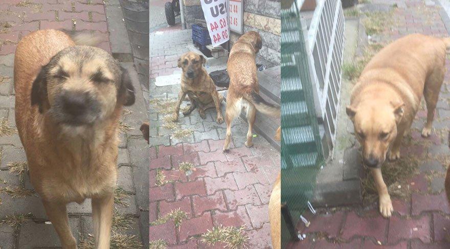 Eyüp Belediyesi hayvanseverlerin protestosuna misilleme yaptı