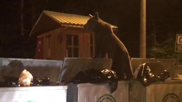 Türkiye'nin de bazı bölgelerinde zaman zaman ayılar şehre inip yemek arıyor.