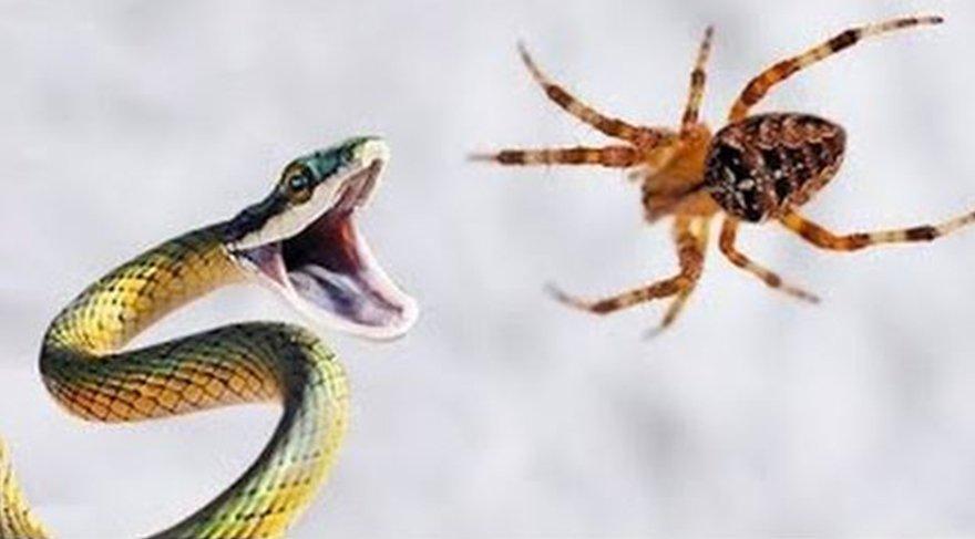 Yılan ve örümcekten neden korkarız? Bilim insanları açıkladı...