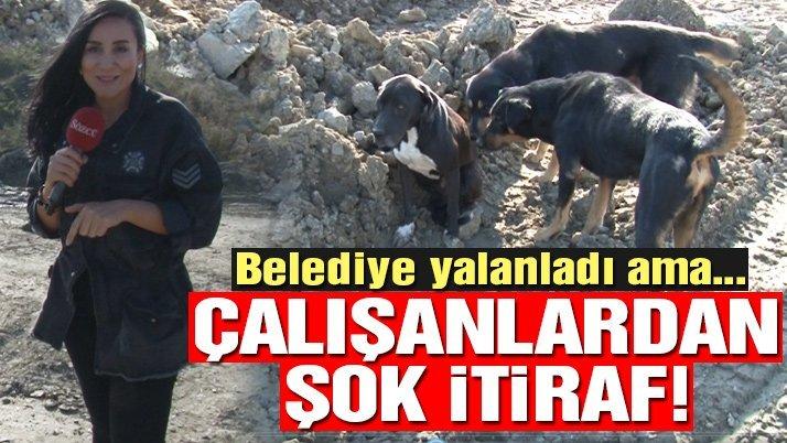 Eyüp Sultan Belediyesi veterinerinden çok konuşulacak itiraf!