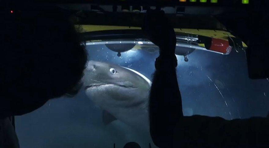 Belgesel ekibine köpek balığı saldırdı