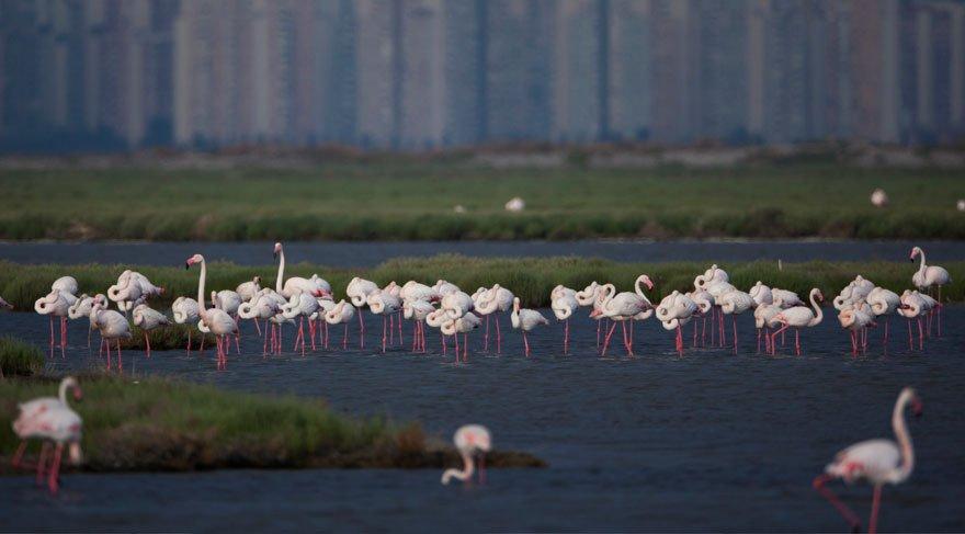 Doğa Derneği, flamingolar için uyardı! 'Projeyi iptal edin'