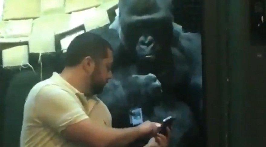 Fotoğraf seçen goril videosu sosyal medyanın gündeminde
