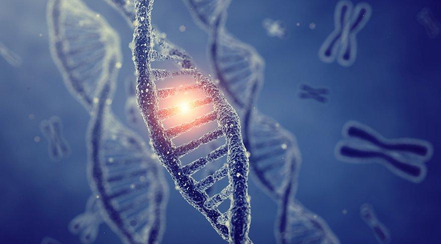 Bilim insanları yaşlanmayı geciktiren gen buldu