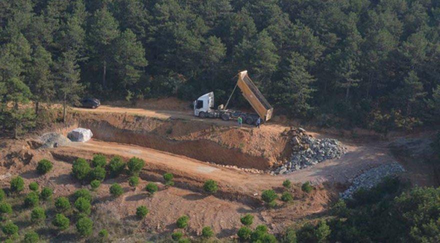 İstanbul ormanlarında çıldırtan ağaç katliamı