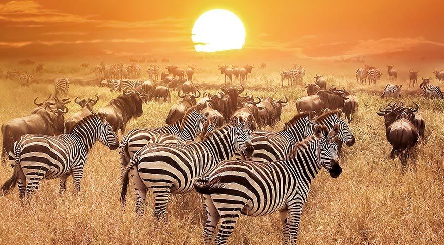 Afrika gezi rehberi