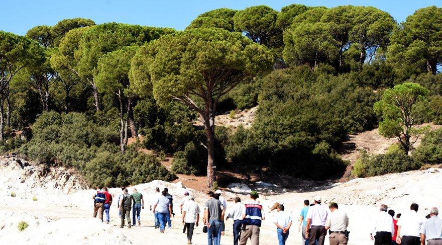 Mahkeme çam ağaçlarının kesilmesini durdurdu