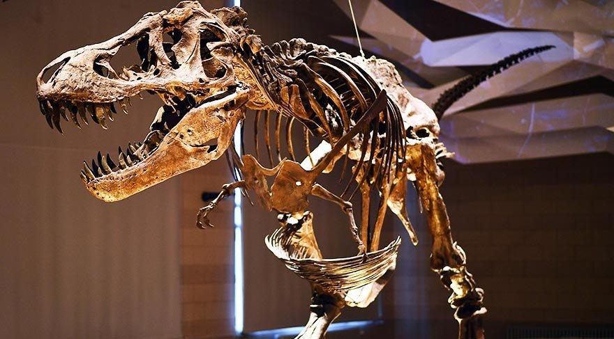 210 milyon yıllık Plateosaurus ziyaretçilerini bekliyor