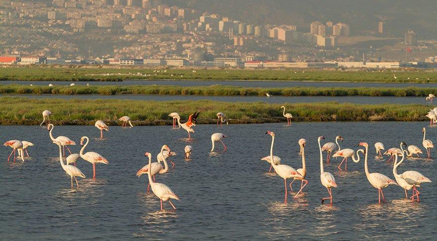'Gediz Deltası UNESCO Dünya Doğa Mirası olsun'