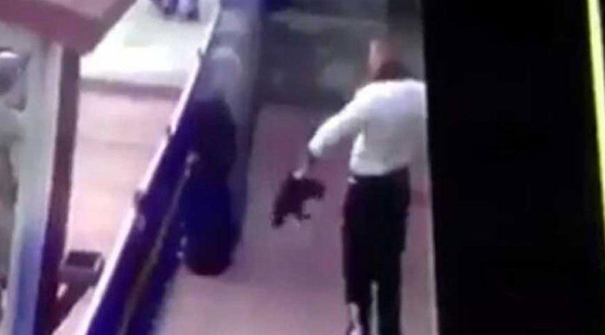 Erzincan'da kediye işkence edilmesi bardağı bir kez daha taşırdı!