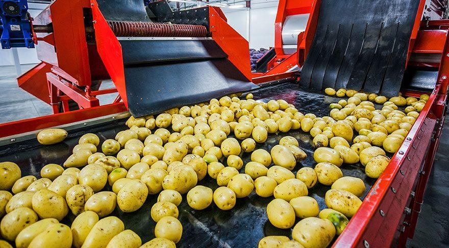 Bir yıl boyunca sadece patates yiyerek 50 kilo verdi! İşte inanılmaz değişim