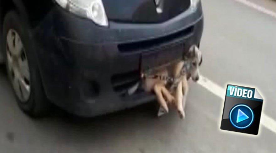 Pendik'te akıl almaz görüntü! Tampona sıkışan yaralı köpekle dakikalarca ilerledi