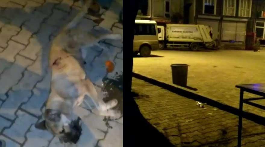 Belediye suç üstü yakalandı! Köpekleri katlettiler…