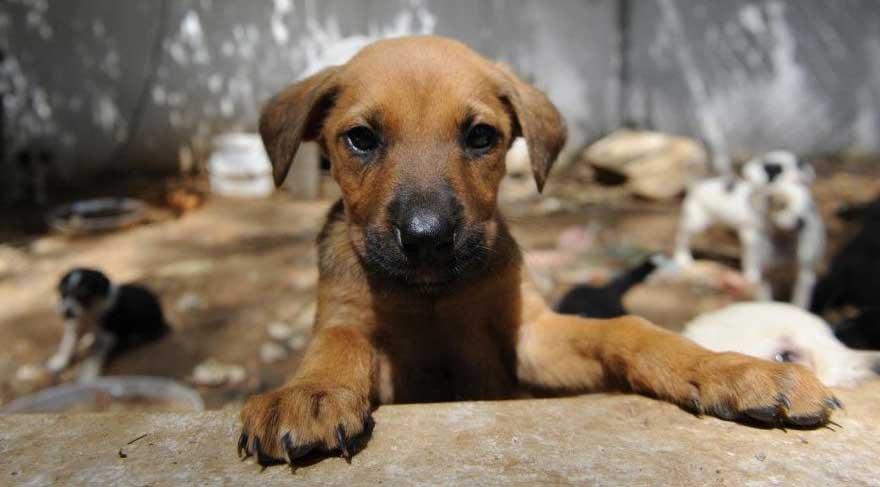 Sokak hayvanlarına işkence edene 4,5 yıl hapis getiriliyor