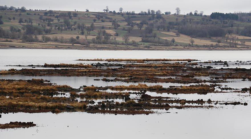 Ladik Gölü'nün yüzen adacıkları tehlikede