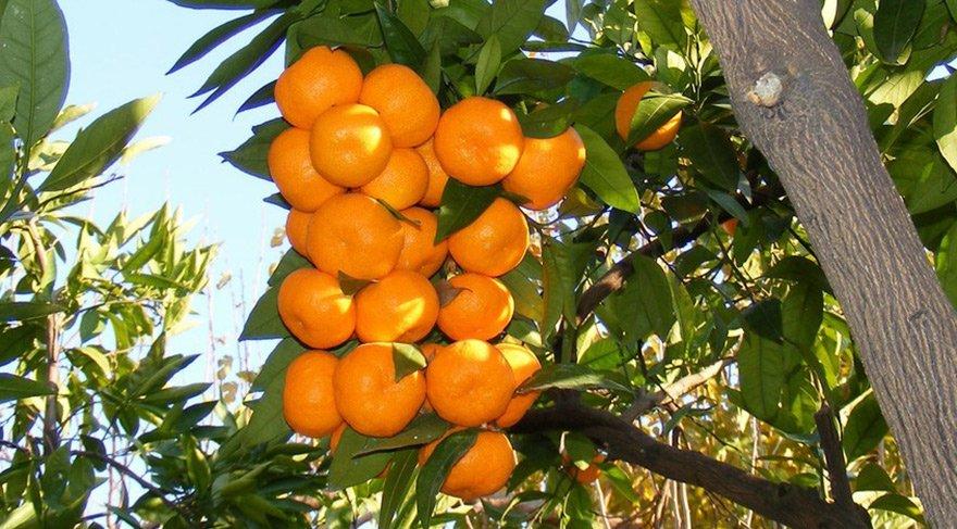 Meyve ürünlerinin üretim miktarı 21 milyon tona yaklaştı