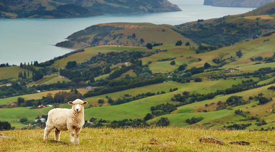 Yeni Zelanda'ya gitmek için 10 neden - Seyahat Haberleri