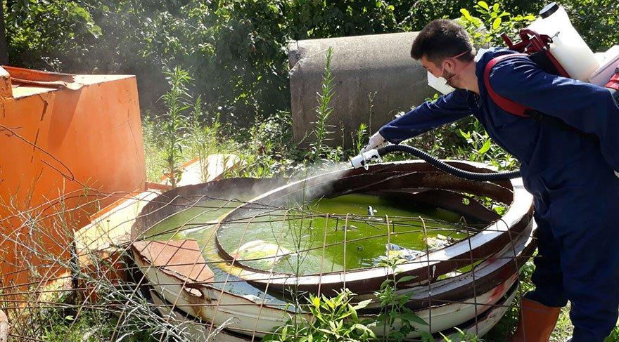 Doğu Karadeniz'de, Zika virüsü salgınına neden olan Aedes türü sivrisinekler tespit edildi