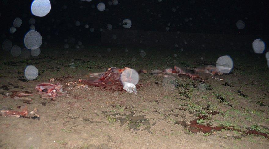 Foto: DHA / Polislerin geldiğini gören şüpheliler kestikleri atlara ait etleri bırakıp kaçtı
