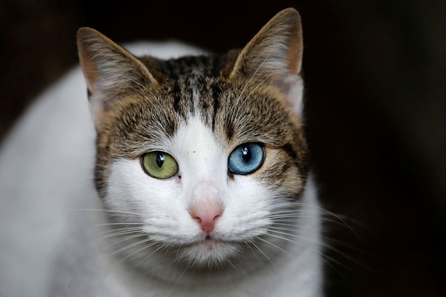 SOKAK KEDİLERİNİN TEDAVİSİNİ HALK YAPTIRIYOR Haberde halkın kedileri ne pahasına olursa olsun tedavi ettirdiği belirtildi. Kedilerin kliniklerde iyileştirildiği kaydedildi.