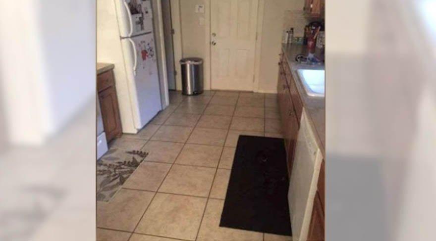 Fotoğrafa gizlenmiş köpeği görebildiniz mi?