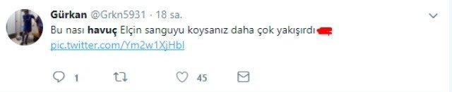 havuc-13