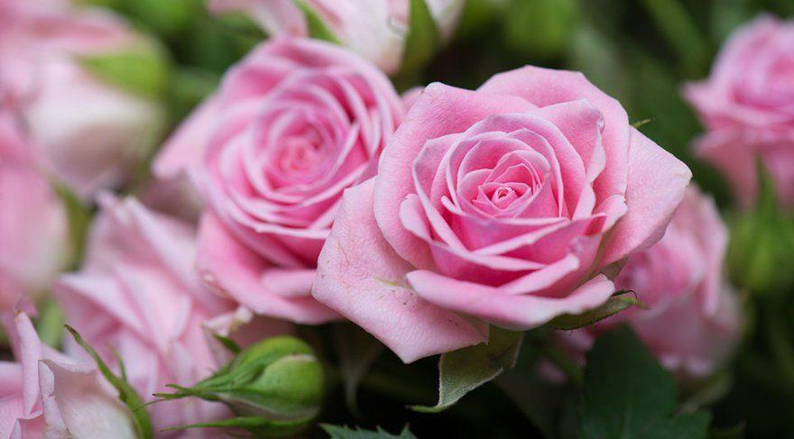 Sevgililer gününe bir gün kala mezatta çiçek bitti