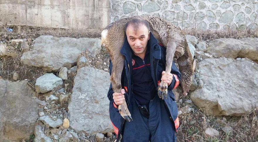 Karacayı kurtarıp sırtında taşıdı