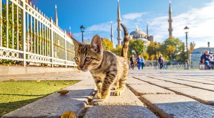 İstanbul'un kedileri dünyaya haber oldu