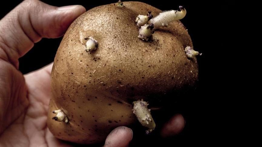 Gıdalardaki gizli zehirlere dikkat! Patatesi bu haldeyken sakın tüketmeyin!