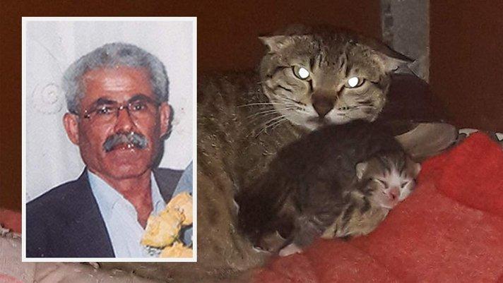 Yavru kediyi parçaladı, serbest bırakıldı!