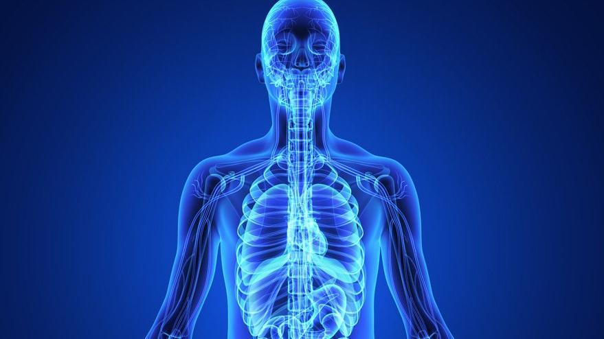 Bilim dünyası şaşkın: Yepyeni bir organ keşfedildi