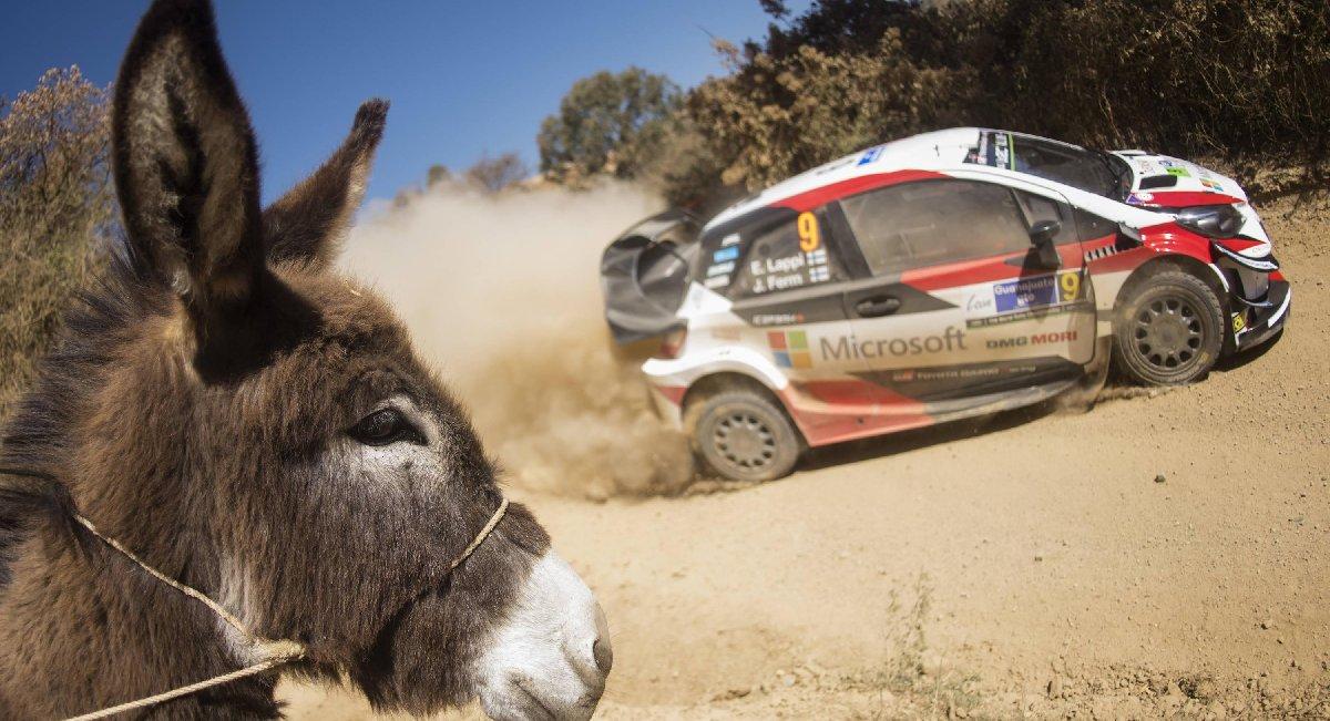 wrc-rally-guanajuato-mexico-donkey-kopya